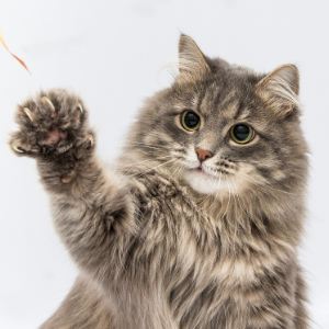 Cat reaching out with her paw